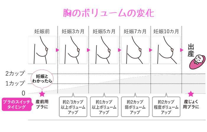 妊娠中のバストサイズの変化